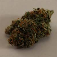 Buy Haze Automatic Seeds