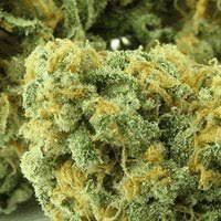 Buy WSS Skunk Automatic Seeds