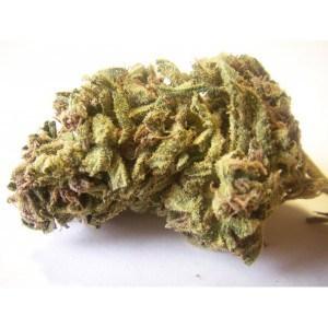 Buy Jack Herer Medical Marijuana Strain